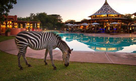A striped visitor to the Avani VicFalls resort