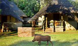 Chobe Safari Lodge Chalets with warthog visitor